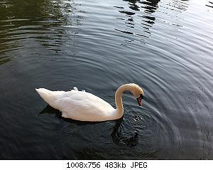 Нажмите на изображение для увеличения Название: IMG_5459 копия.jpg Просмотров: 1 Размер:483.0 Кб ID:1153653