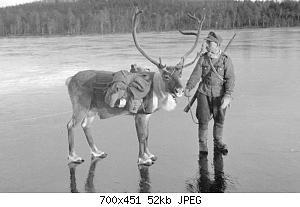 Нажмите на изображение для увеличения Название: олень.JPG Просмотров: 1 Размер:51.6 Кб ID:1133385